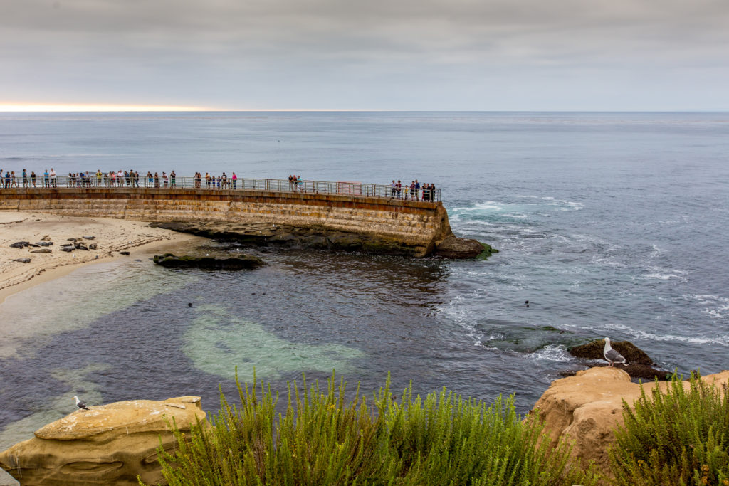 View of Children's Pool with seals on the shore and visitors enjoying the views from the walkway